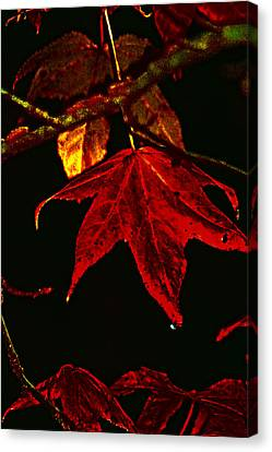Canvas Print featuring the photograph Autumn Leaves by Lesa Fine