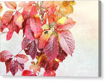 Autumn Leaves Canvas Print by Liane Wright