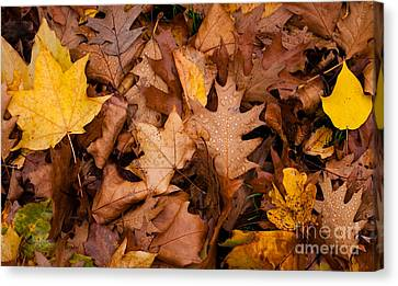 Canvas Print featuring the photograph Autumn Leaves by Matt Malloy