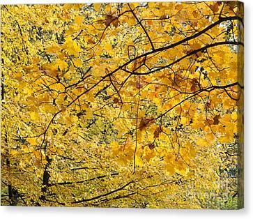 Autumn Leaves Canvas Print by Michal Boubin