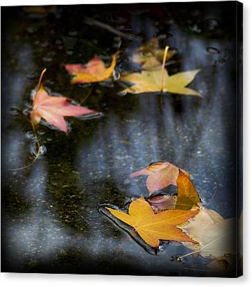 Autumn Leaves On Water Canvas Print