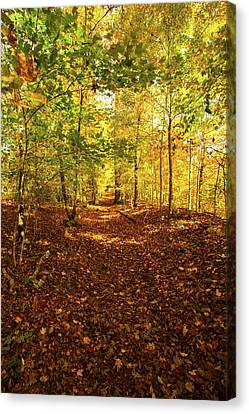 Autumn Leaves Pathway  Canvas Print by Jerry Cowart