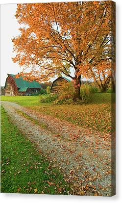 Autumn Leaves, Red Barn And Dirt Path Canvas Print