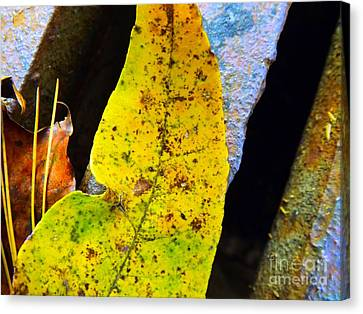 Autumn Leaves Canvas Print by Robyn King