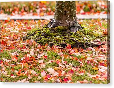Maple Season Canvas Print - Autumn Leaves  by Terry DeLuco