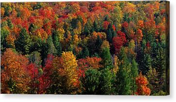 Autumn Leaves Vermont Usa Canvas Print