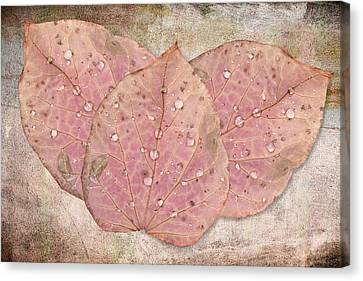 Autumn Leaves With Water Drops  Canvas Print by Angela A Stanton