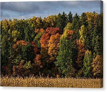 Autumn Canvas Print by Leif Sohlman