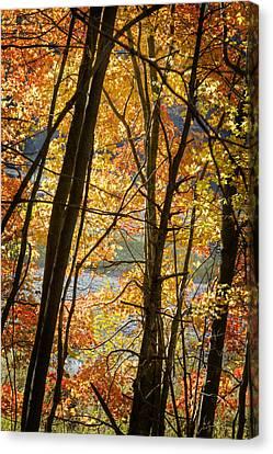 Barbara Smith Canvas Print - Autumn Light by Barbara Smith