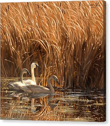 Autumn Light- Trumpeter Swans Canvas Print by Aaron Blaise