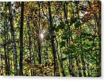 Autumn Lights  Canvas Print by Rich Fletcher