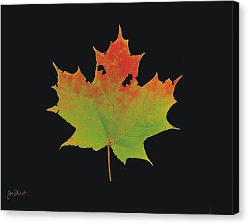 Autumn Maple Leaf 1 Canvas Print