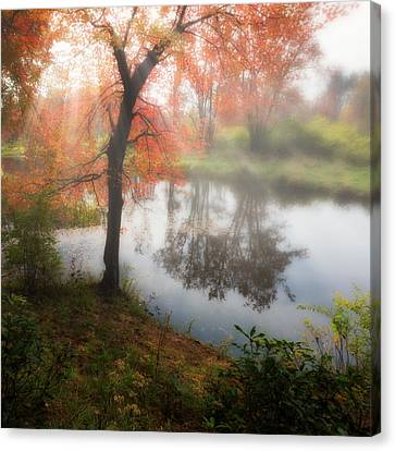 Autumn Maple Tree Canvas Print by Bill Wakeley