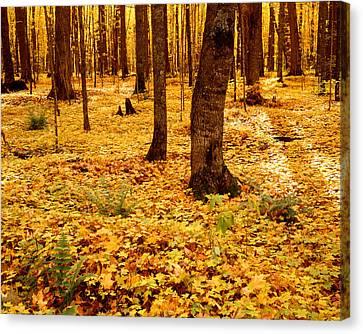 Autumn Maples Canvas Print by Tim Hawkins