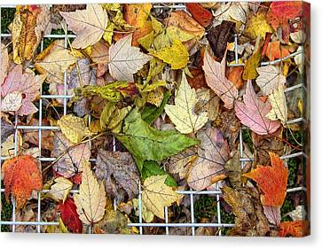 Autumn Medley Canvas Print