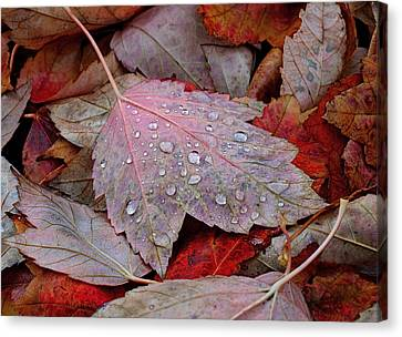 Red Leaf Canvas Print - Autumn Melange by Rona Black