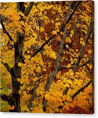 Autumn Moods 21 Canvas Print by Rodney Lee Williams