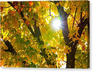Canvas Print featuring the photograph Autumn Morn by Dee Dee  Whittle