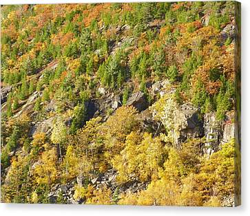 Canvas Print featuring the photograph Autumn Mountain Side by Gene Cyr