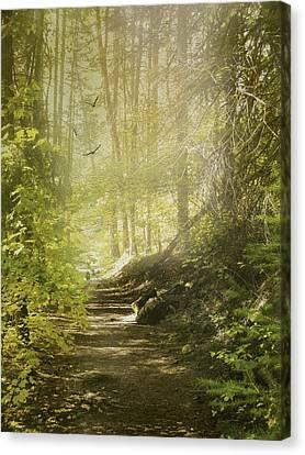 Autumn Myst Canvas Print by Diane Schuster