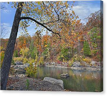 Autumn Oak And Hickory Forest Canvas Print by Tim Fitzharris