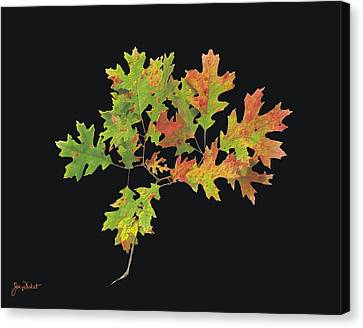 Autumn Oak Leaves Canvas Print