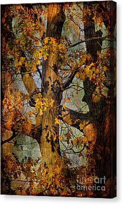 Autumn Oaks In Dance Mode Canvas Print by Lois Bryan