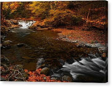 Autumn On Laurel Creek Canvas Print by Johan Hakansson