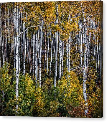 Canvas Print featuring the photograph Autumn On Mcclure Pass by Ken Smith
