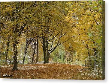 autumn on Moenchsberg in Salzburg Canvas Print by Rudi Prott