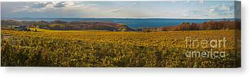 Autumn On Old Mission Peninsula Panoramic Canvas Print