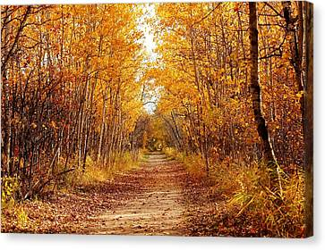 Autumn On The Harte Trail Canvas Print by Larry Trupp