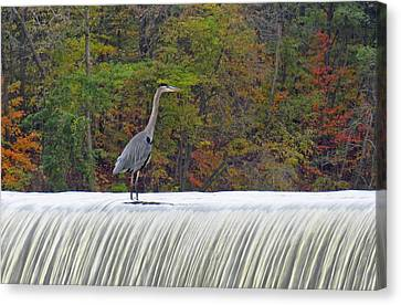 Autumn On The Maumee Canvas Print by Cathy Cooley