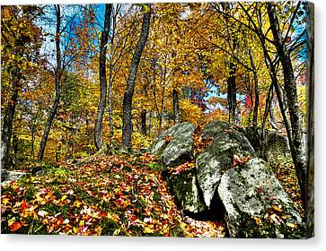 Autumn On The Rocks Canvas Print by David Patterson