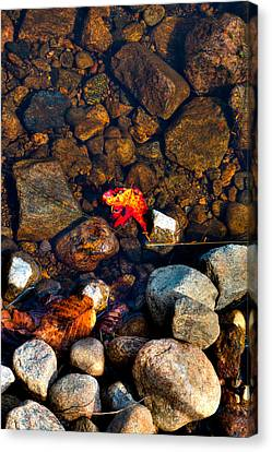 Autumn On The Shore Canvas Print by David Patterson