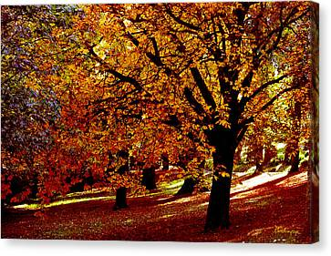 Canvas Print featuring the photograph Autumn On Wombat Hill II by Chris Armytage