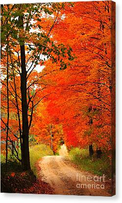 Canvas Print featuring the photograph Autumn Orange 2 by Terri Gostola