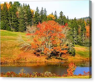 Canvas Print featuring the photograph Autumn Orange by Gene Cyr