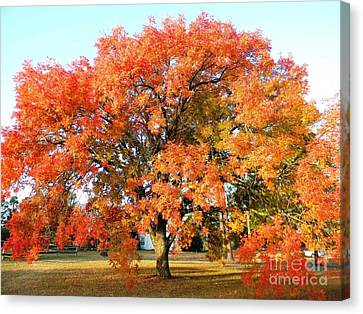 Autumn Orange Canvas Print