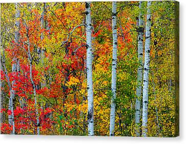 Autumn Palette Canvas Print by Mary Amerman