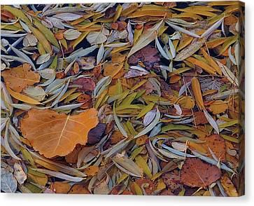 Autumn Palette Canvas Print by Steven Milner