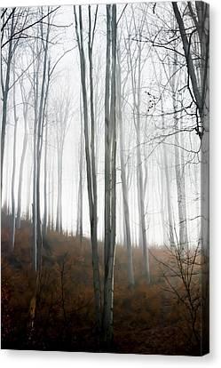 Autumn Pastel Canvas Print by Ioana Todor