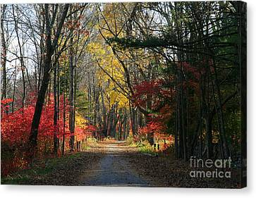 Autumn Paths    No.2 Canvas Print by Neal Eslinger