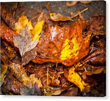 Autumn Pile Canvas Print