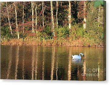 Autumn Pond Sunset With Swan Canvas Print