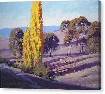 Autumn Poplars Canvas Print by Graham Gercken