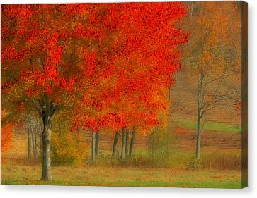 Autumn Popping Canvas Print by Karol Livote