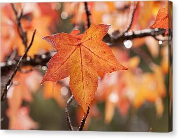 Autumn Rain Canvas Print by Michelle Wrighton