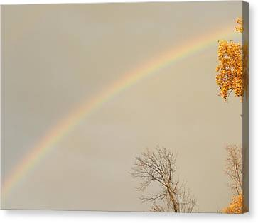 Autumn Rainbow Canvas Print by Cim Paddock