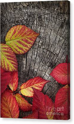 Autumn Red Leaves Canvas Print by Mythja  Photography